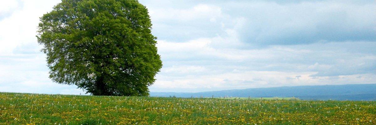 image écologie et ruralité
